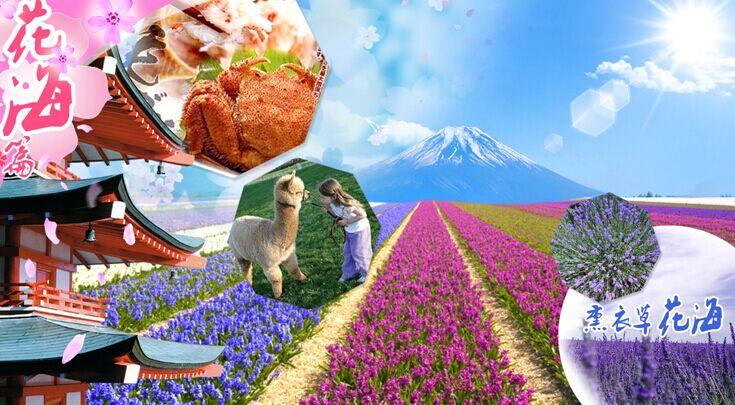 【春节.北海道】东京、箱根、大阪、京都、北海道8日(七彩花海)