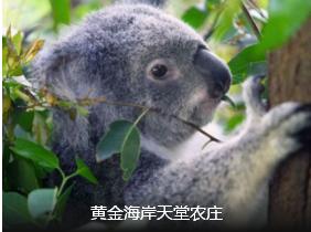 【奥凯+新南北岛】澳大利亚(凯恩斯)新西兰(南北岛)16日