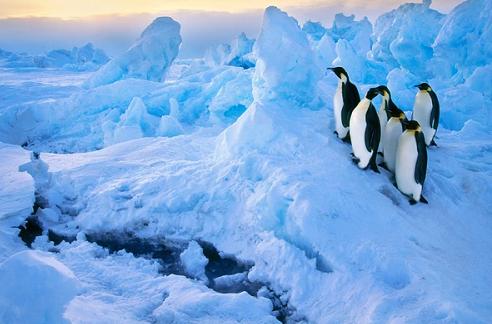 <海钻石号>巴西+阿根廷+经典南极'+智利秘鲁34天行程 客房面积大 全船无内舱