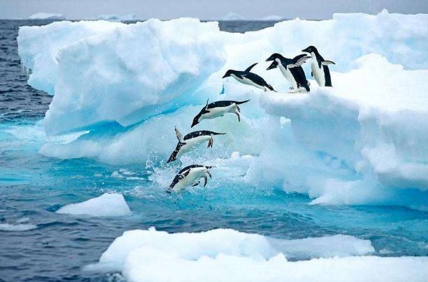 【纯美南极】纯美南极摄影16天璀璨之旅