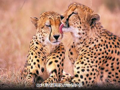<精品>花园大道 南非10天之旅  比邻斯堡动物园 斯泰伦波斯小镇 先民纪念馆