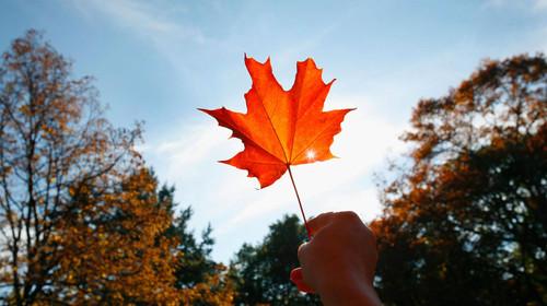 <加国名校>加拿大多伦多+渥太华+蒙特利尔+魁北克城+大瀑布9日