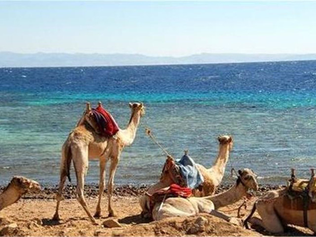 <埃及&埃塞俄比亚12日>开罗 红海 卢克索 亚的斯亚贝巴 埃塞俄比亚航空